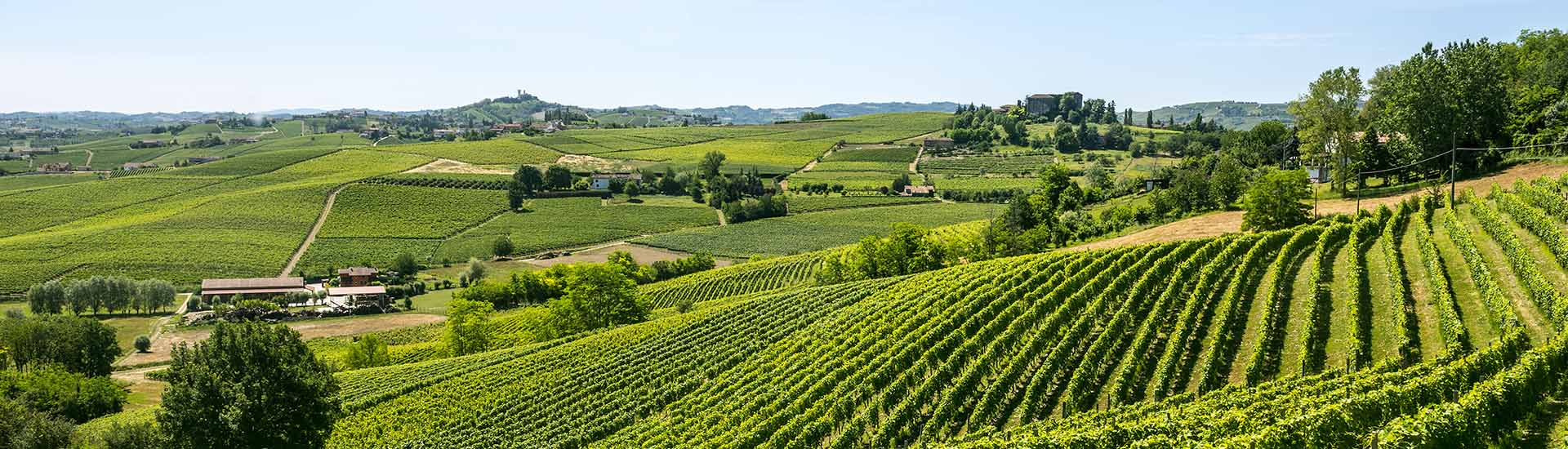 Langhe (Asti, Cuneo, Piedmont, Italy) - Landscape at summer with vineyards